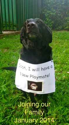 How I announced my pregnancy on fb with my dog Hank!