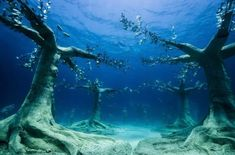 Messaggistica   LinkedIn Ayia Napa, Jason Decaires Taylor, Underwater Sculpture, Unusual Hotels, Beneath The Surface, New Museum, Environmentalist, Crystal Clear Water, Marine Life