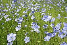 memories of summer 2016 - memories of summer such as blue flowers on a field…