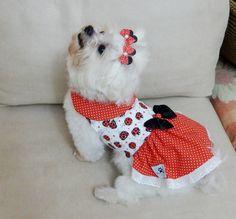 Vestido Pet Joaninha - Tam. 01 ao 04   Angels Pet Moda   Elo7