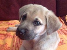 Leiva Devesa  #veterinario www.veterinario.es