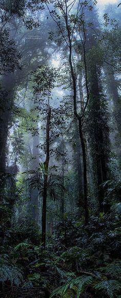 Gondwana Rainforest, World Heritage Site, Dorrigo, NSW, Australia / Jay Daley Beautiful World, Beautiful Places, Beautiful Pictures, Beauty Dish, Landscape Photography, Nature Photography, Jungle Tree, Foto Art, Amazing Nature