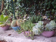 cactus&succulente