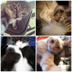 Thus do today Selfie, amazing cats http://klikajte.sk/index.php/19-takto-sa-dnes-robia-selfie-uzasne-selfie-maciek.html #today #selfie #amazing #cats