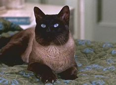 D.C. (played by cat actor Syn) is a beautiful Siamese who helps to rescue a kidnapped woman in Disney's That Darn Cat! (1965).