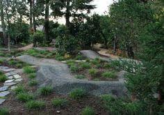 Garden with Pump Track eclectic landscape