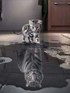 Poesje/tijger