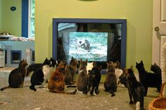 5 Videos Designed to Entertain Your Bored Cat
