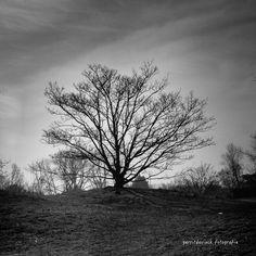 Dark tree #HogeBlekker