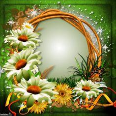 Studio Background Images, Frame Background, Butterfly Frame, Flower Frame, Cute Frames, Picture Frames, Valentines Frames, Borders And Frames, Floral Border