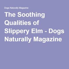 The Soothing Qualities of Slippery Elm - Dogs Naturally Magazine Gut Health, Health And Nutrition, Cane Corso Italian Mastiff, Grazing Animals, American Bulldog Mix, Slippery Elm, My Heart Is Breaking, Mans Best Friend, Puppy Love