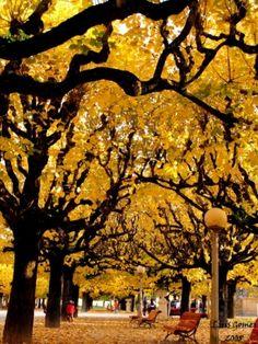 Paisagem Natural/Coimbra em cores do outono II..