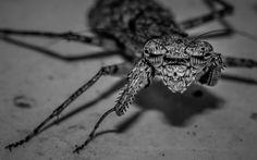 Mantis by the Morning Light by Anubhav Vanamamalai   500px