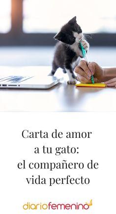 Texto precioso para expresar lo que sientes por tu mascota 😻 #cartasdeamor #loveletter #cartaparamigato #catletter #lovecat #DíaInternacionaldelGato #internationalcatday #DiarioFemenino Animals, Writing Letters, Cute Puppies, Love Letters, Pets, Gatos, Life, Animales, Animaux