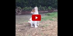Bulldog Puppy Becomes Adorably Confused After Seeing Raindrops for First Time