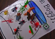 Bug counting game