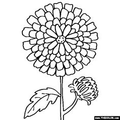 Free Flowers Coloring Pages. Color in this picture of a Chrysanthemum or Mum and others with our library of online coloring pages. Save them, send them; they're great for all ages. Online Coloring Pages, Free Coloring Pages, Coloring Sheets, Adult Coloring, Colouring, Lotus Flower Mandala, Chrysanthemum Flower, Dahlia Flower, To Color