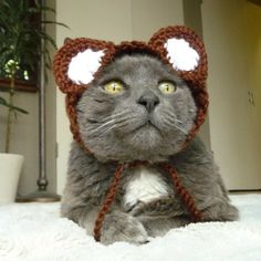 Pin for Later: 70+ Kitty Costumes That You Will Absolutely Love — but Your Cat Will Probably Hate Bear