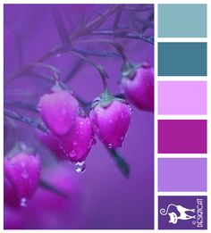 Sweet Purple - Teal, Lilac, Pink, Purple - Designcat Colour Inspiration Board