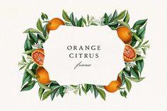 Orange Wedding Invitations, Wedding Invitation Kits, Celtic Runes, Art Antique, Fruit Illustration, Vintage Botanical Prints, Clip Art, Orange Fruit, Frame Wreath