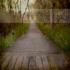 A Crow's Path