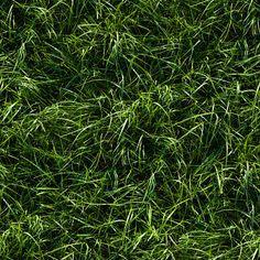 Seamless long green grass ground texture