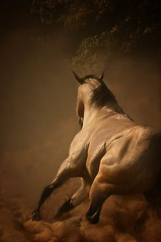 Dancing in the Dust captures the power,the strength,the pure grace and beauty of the American Quarter Horse.    Signed fine art prints are available by contacting me.    All work is copyrighted and may not be used or downloaded,in whole or part,including paintings,without permission of artist.    Member of the Equine Arts Protection League.