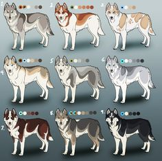 In addition to the splendid variety of coat colors available, Siberian Huskies may also have a variety of eye colors. As