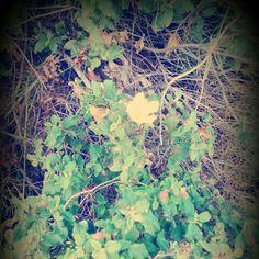Βοτανικος κηπος