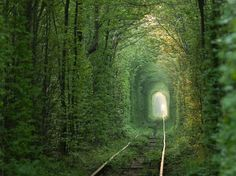 Also this looks like romantic you will lose it! Just get to know this railway is used 3 times a day just to deliver CUTTED TREES!  13 Enchanting Tree Tunnels You Need To Walk Through