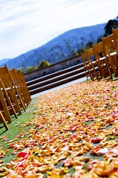 Love the shade of the rose petals they chose to line the aisle with.  Perfect aisle for a Fall Wedding.