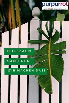 Ein Holzzaun muss in vier Jahreszeiten viel aushalten: Brennende Sonne, Herbststürme, Kälte und Schnee. Plant Leaves, Plants, Terrace, Four Seasons, Wood Fences, Garden Fencing, Snow, Plant, Planting