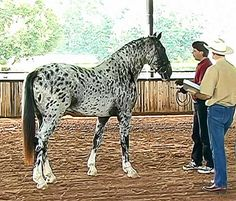 Beautiful horse, but I think I'm getting a headache looking at him. Me too !!