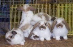 Step-by-step guidelines and expert tips for raising rabbits. We have both basic instructions and detailed articles on fostering, building nestboxes, Raising Rabbits For Meat, Meat Rabbits, Rabbit Litter, Beautiful Rabbit, Rabbit Breeds, Rabbit Eating, Bunny Care, Baby Bunnies, Lop Bunnies