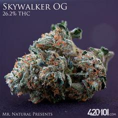 Skywalker OG from the multiple Cannabis Cup winner Mr. Natural. Find it on our #Connoisseur Shelf #cc101 #mmj #skywalker