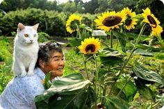 abuela y gato japones Fukumaru