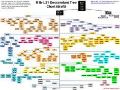 L21Phylogenetic Tree, September 2014