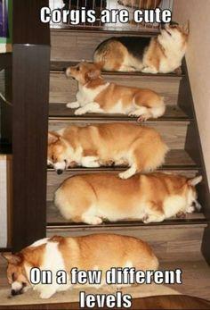 Stairway to Corgi heaven