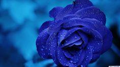 full size Blaue schöne Hintergrundbilder 1920x1080 download