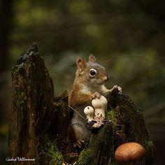 *squirrel