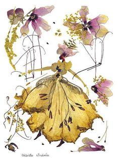 dried-pressed-flower-art-florotypie-elzbieta-wodala-27__605