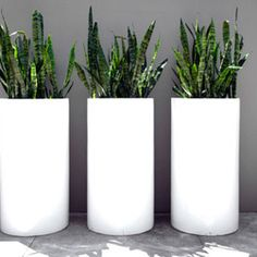 Contemporary Lightweight Tall Cylinder - The Contemporary Range, made from a mixture of glass fibre and clay, makes for a strong yet lightweight planter. The modern material is complimented by the slick finish and ultra modern shapes that the range comes in.