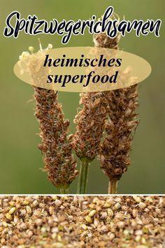 Jetzt ist die beste Zeit, um reife Samen von Spitzwegerich und Breitwegerich zu sammeln. Sofern die Samenstände braun sind, können die kleinen Samen geerntet werden. Wir verraten euch, wie man die Spreu los wird und was man mit den Samen machen kann. Superfood, Clean Eating Vegan, Smoothie Bowl Vegan, Plant Based, Vegetables, Breakfast, Plants, Recipes, Herb Garden Pallet