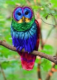real colorful owls - Google Search