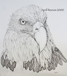 I have black and white line art drawings of Bald Eagles hanging in private homes all over the world. This one I finally kept for myself. April Reeves Fine Art