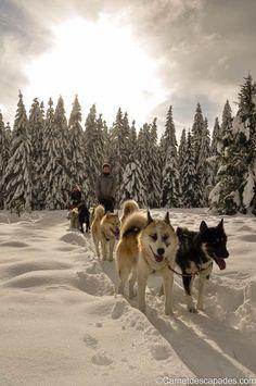 A la rencontre des chiens de traîneaux du Jura - Carnet d'escapades #montagnesdujura #neige