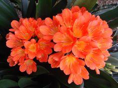 Plantas de interior resistentes, aptas para principiantes - http://www.jardineriaon.com/plantas-de-interior-resistentes-aptas-para-principiantes.html #plantas