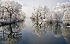 white trees/water