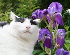 紫菖蒲 - かご猫 Blog
