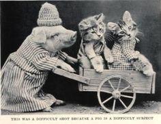 Pig Cart